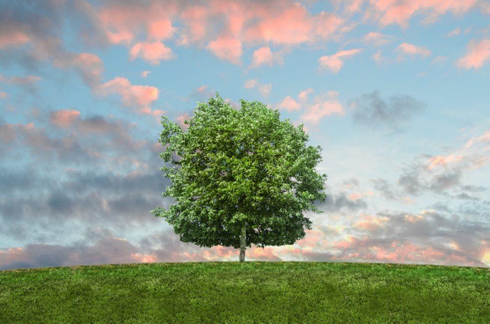 草原と木と空の画像