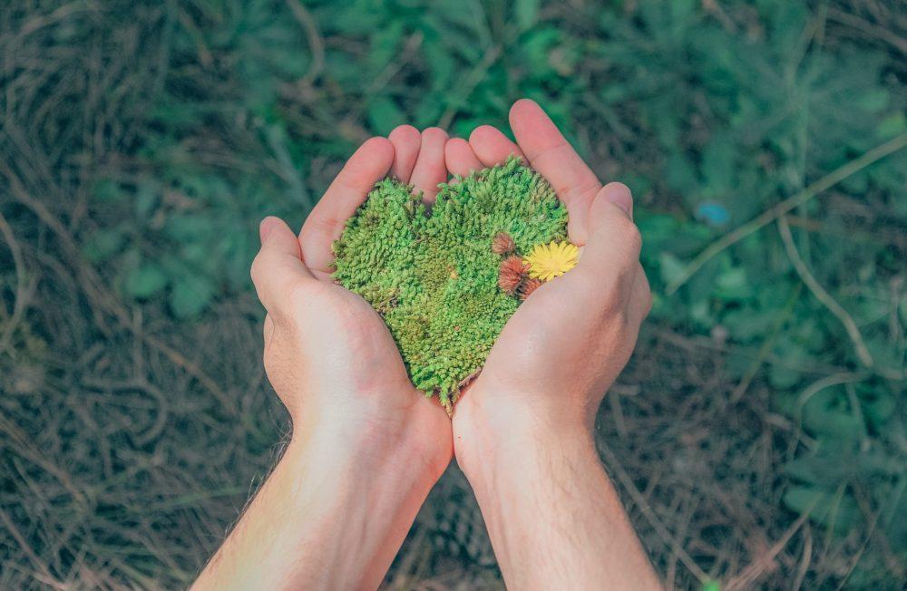 掌の上の植物の画像