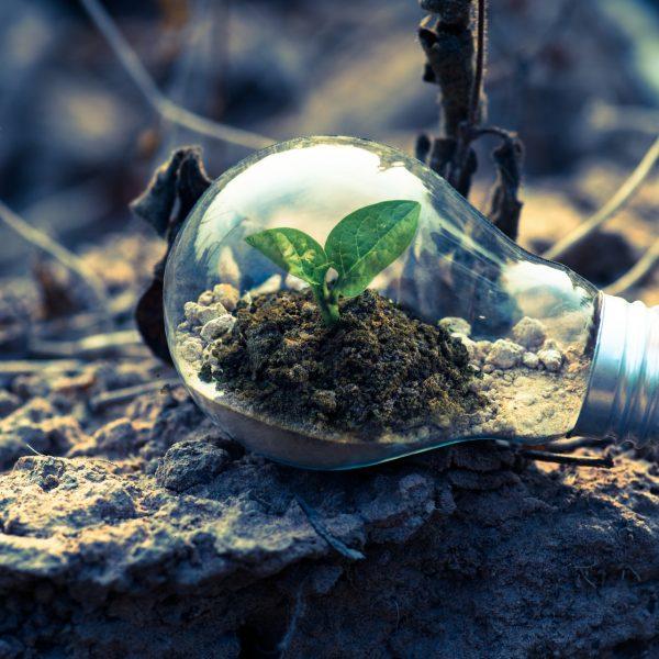 電球の中の緑の画像